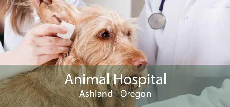 Animal Hospital Ashland - Oregon