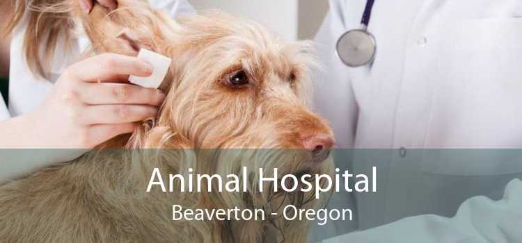 Animal Hospital Beaverton - Oregon