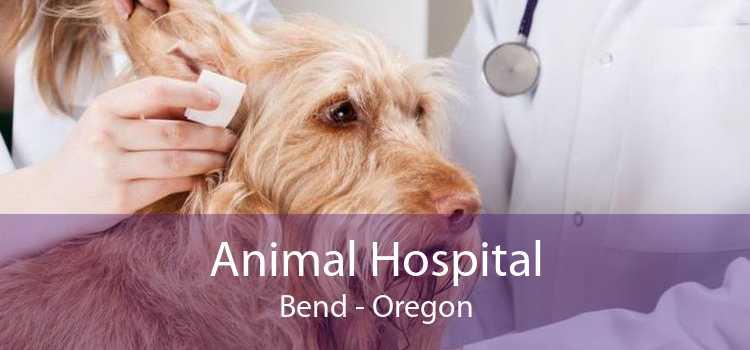 Animal Hospital Bend - Oregon