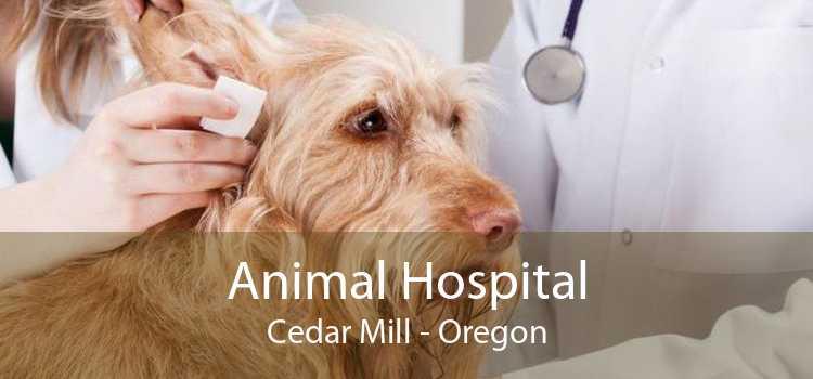 Animal Hospital Cedar Mill - Oregon