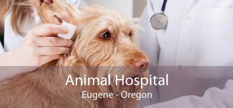 Animal Hospital Eugene - Oregon