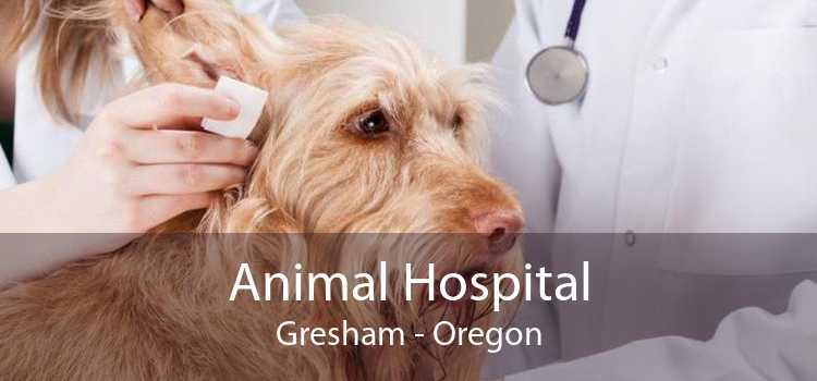 Animal Hospital Gresham - Oregon