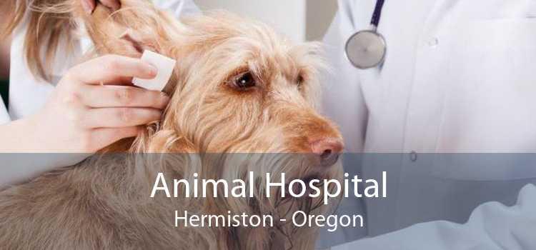 Animal Hospital Hermiston - Oregon