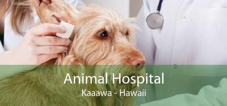 Animal Hospital Kaaawa - Hawaii