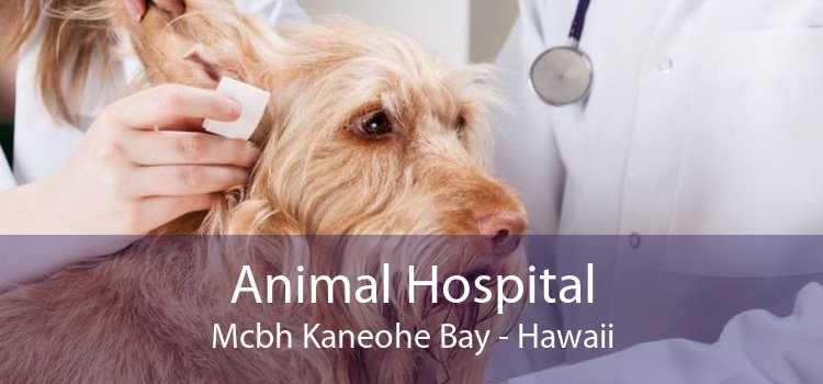 Animal Hospital Mcbh Kaneohe Bay - Hawaii
