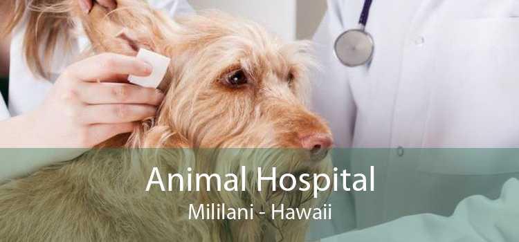 Animal Hospital Mililani - Hawaii