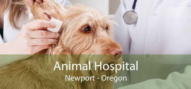 Animal Hospital Newport - Oregon