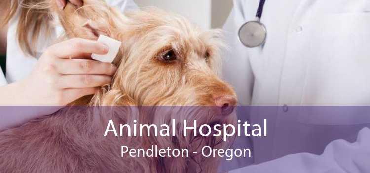Animal Hospital Pendleton - Oregon