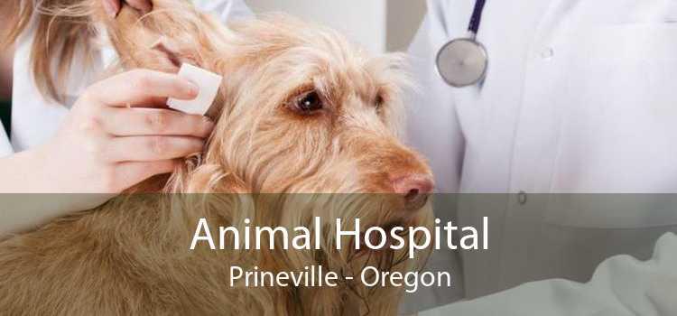 Animal Hospital Prineville - Oregon