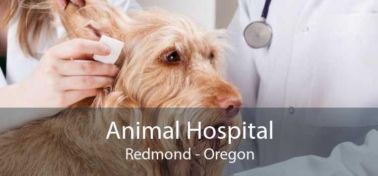 Animal Hospital Redmond - Oregon