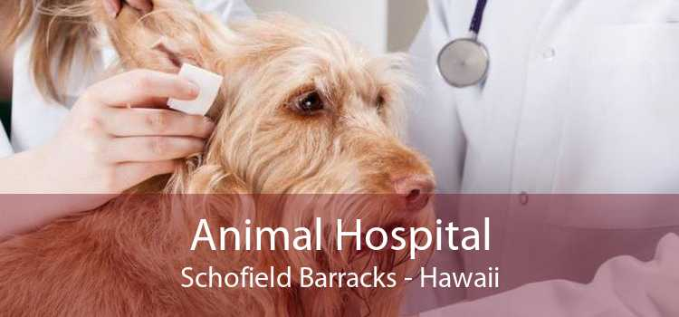 Animal Hospital Schofield Barracks - Hawaii