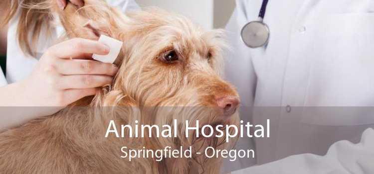 Animal Hospital Springfield - Oregon