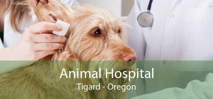 Animal Hospital Tigard - Oregon