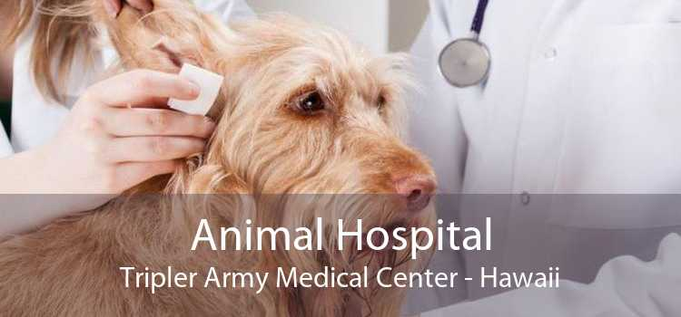 Animal Hospital Tripler Army Medical Center - Hawaii