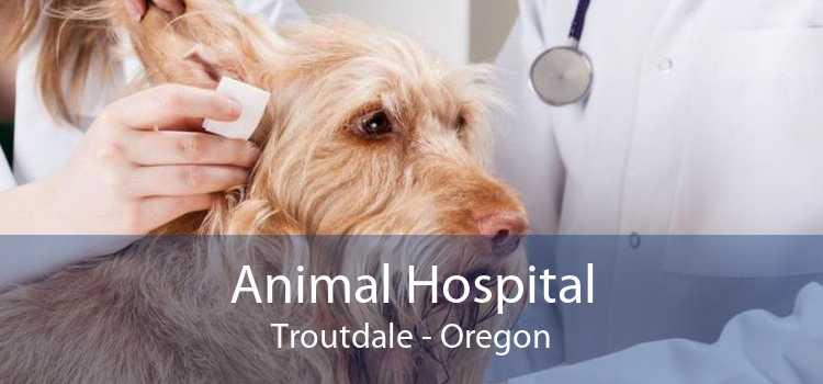 Animal Hospital Troutdale - Oregon