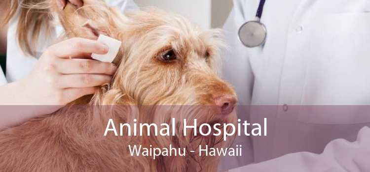 Animal Hospital Waipahu - Hawaii