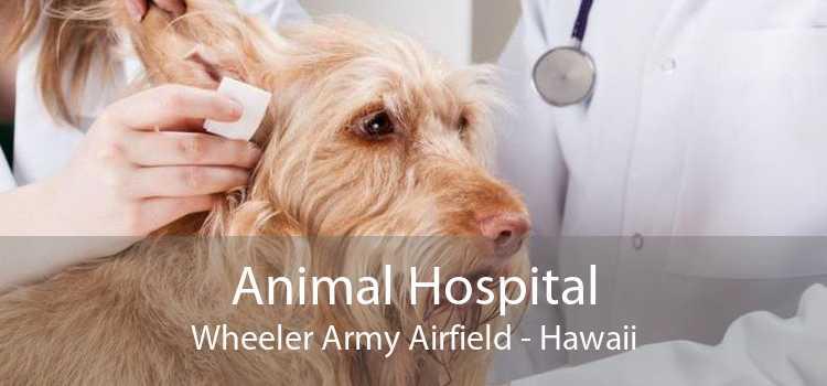 Animal Hospital Wheeler Army Airfield - Hawaii