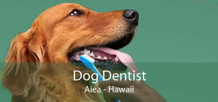 Dog Dentist Aiea - Hawaii
