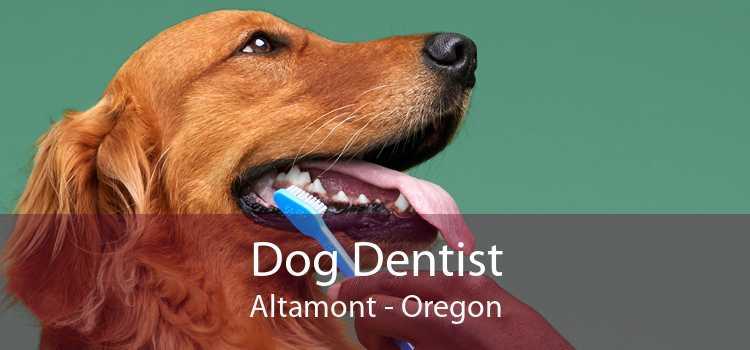 Dog Dentist Altamont - Oregon