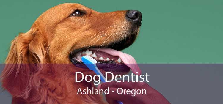 Dog Dentist Ashland - Oregon