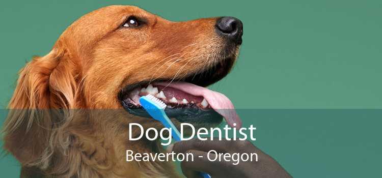 Dog Dentist Beaverton - Oregon