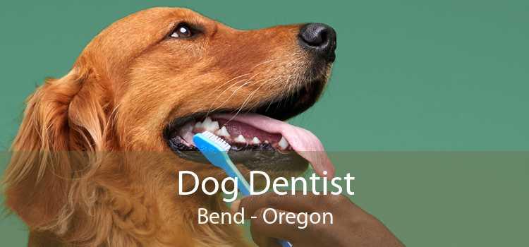 Dog Dentist Bend - Oregon