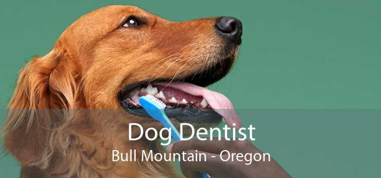 Dog Dentist Bull Mountain - Oregon