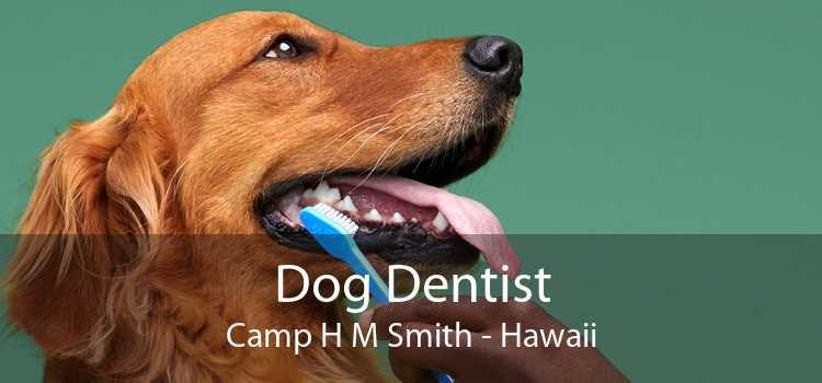 Dog Dentist Camp H M Smith - Hawaii