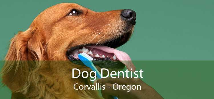 Dog Dentist Corvallis - Oregon