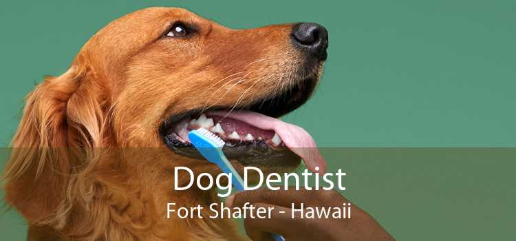 Dog Dentist Fort Shafter - Hawaii