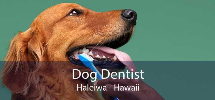 Dog Dentist Haleiwa - Hawaii