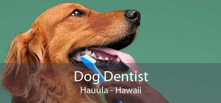 Dog Dentist Hauula - Hawaii