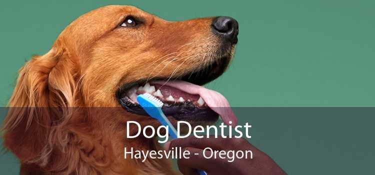 Dog Dentist Hayesville - Oregon