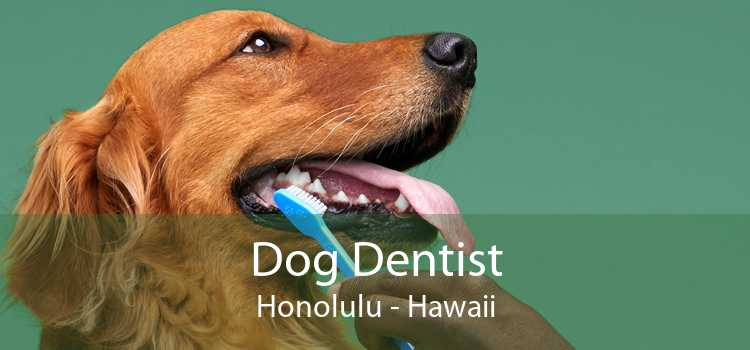 Dog Dentist Honolulu - Hawaii