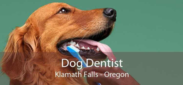 Dog Dentist Klamath Falls - Oregon