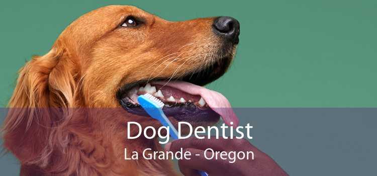 Dog Dentist La Grande - Oregon