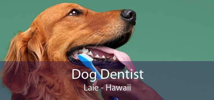 Dog Dentist Laie - Hawaii