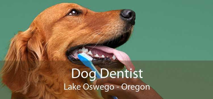 Dog Dentist Lake Oswego - Oregon