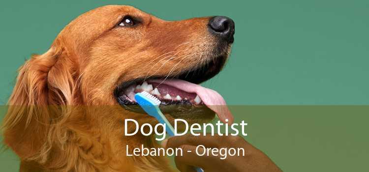 Dog Dentist Lebanon - Oregon