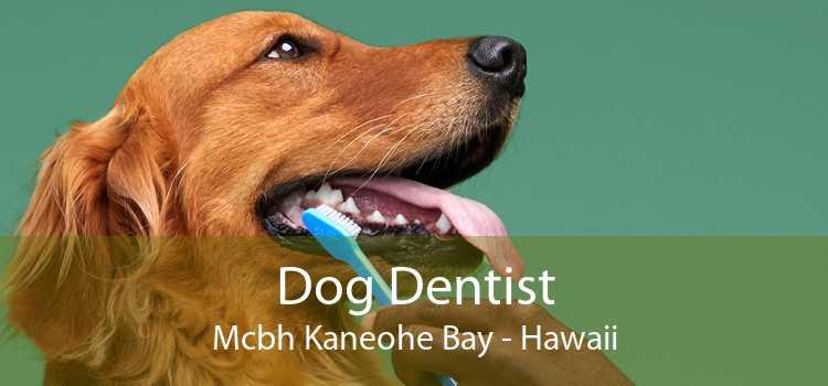 Dog Dentist Mcbh Kaneohe Bay - Hawaii