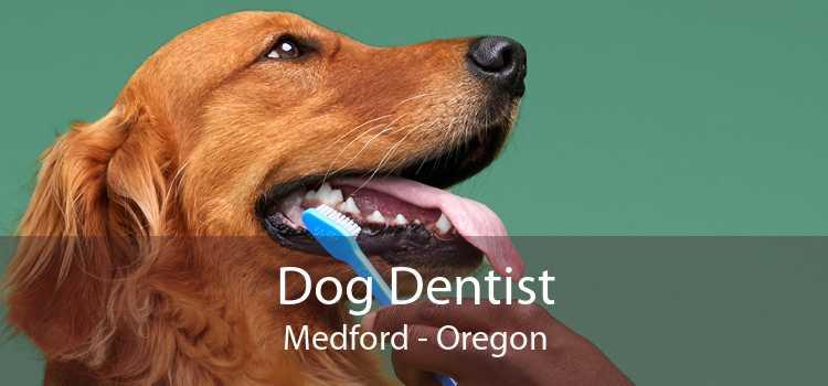 Dog Dentist Medford - Oregon