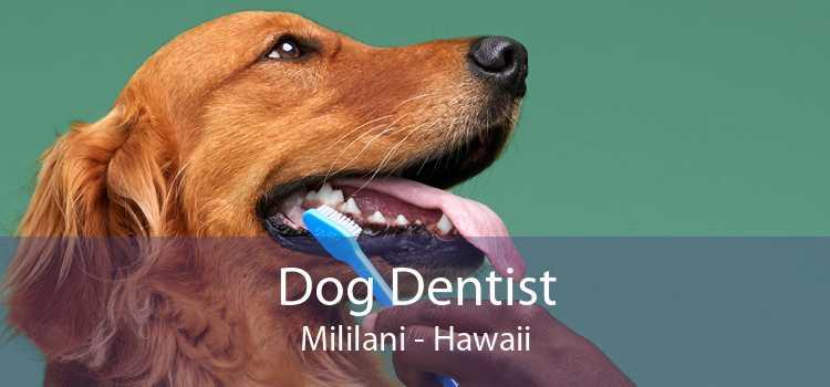Dog Dentist Mililani - Hawaii