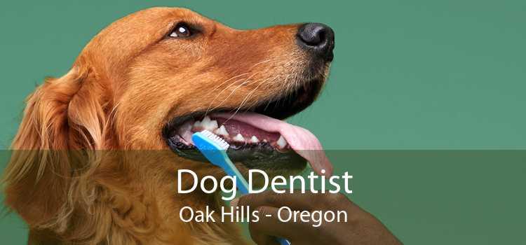 Dog Dentist Oak Hills - Oregon