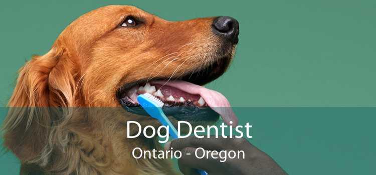 Dog Dentist Ontario - Oregon