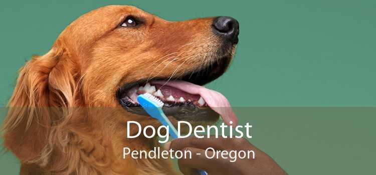 Dog Dentist Pendleton - Oregon