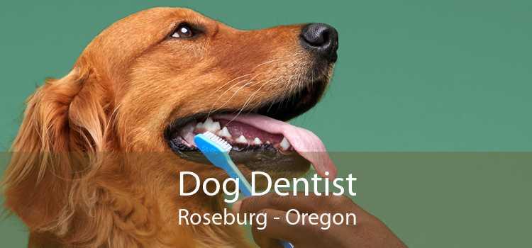 Dog Dentist Roseburg - Oregon