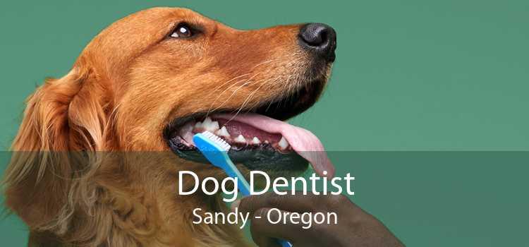 Dog Dentist Sandy - Oregon