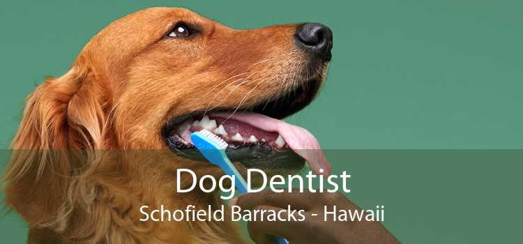 Dog Dentist Schofield Barracks - Hawaii
