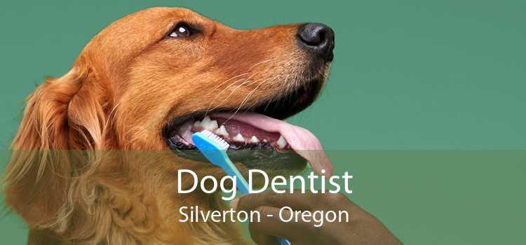Dog Dentist Silverton - Oregon