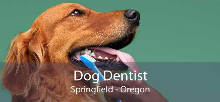 Dog Dentist Springfield - Oregon